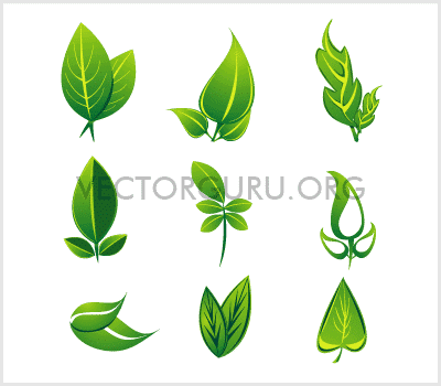 Organic, Leaves Vector